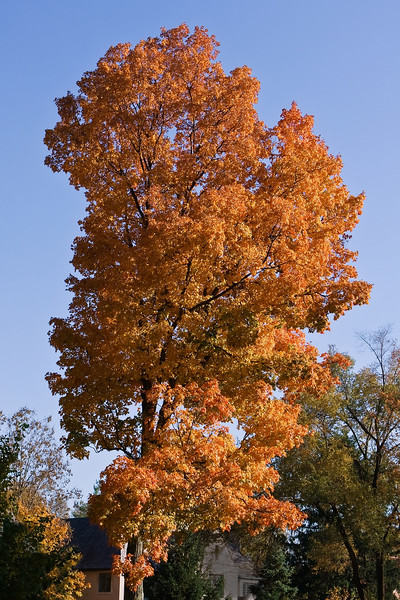 Indiana Fall 0018