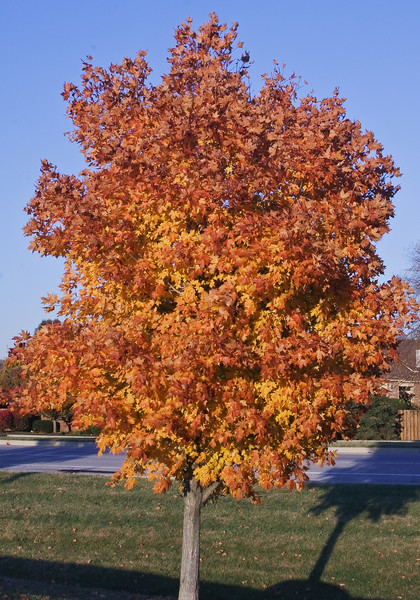 Indiana Fall 0023