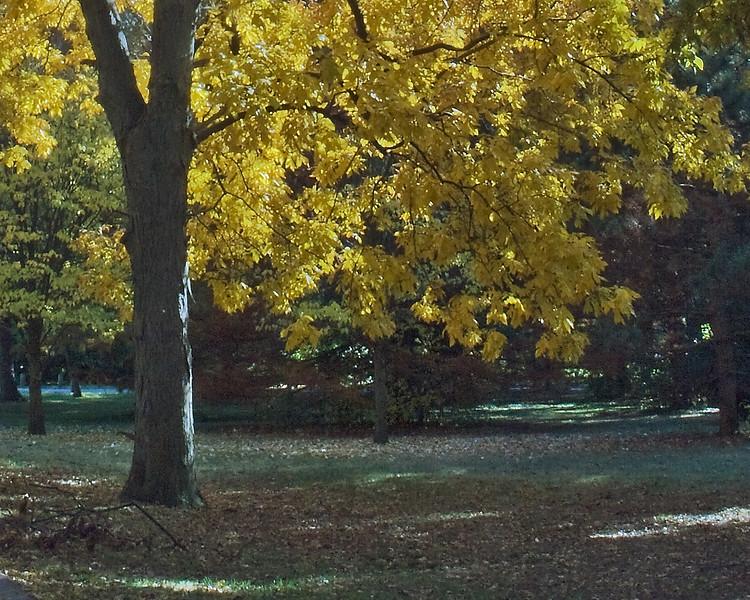 Indiana Fall 0012