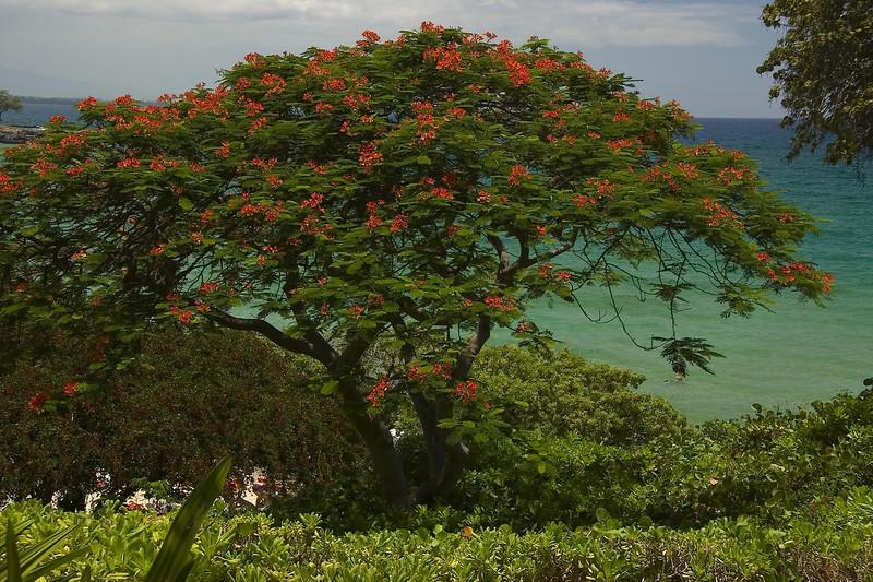 Hawaii 0027