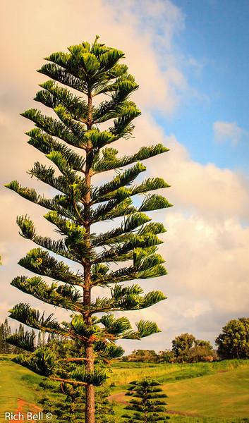 20130426 Kauai Hawaii 0059