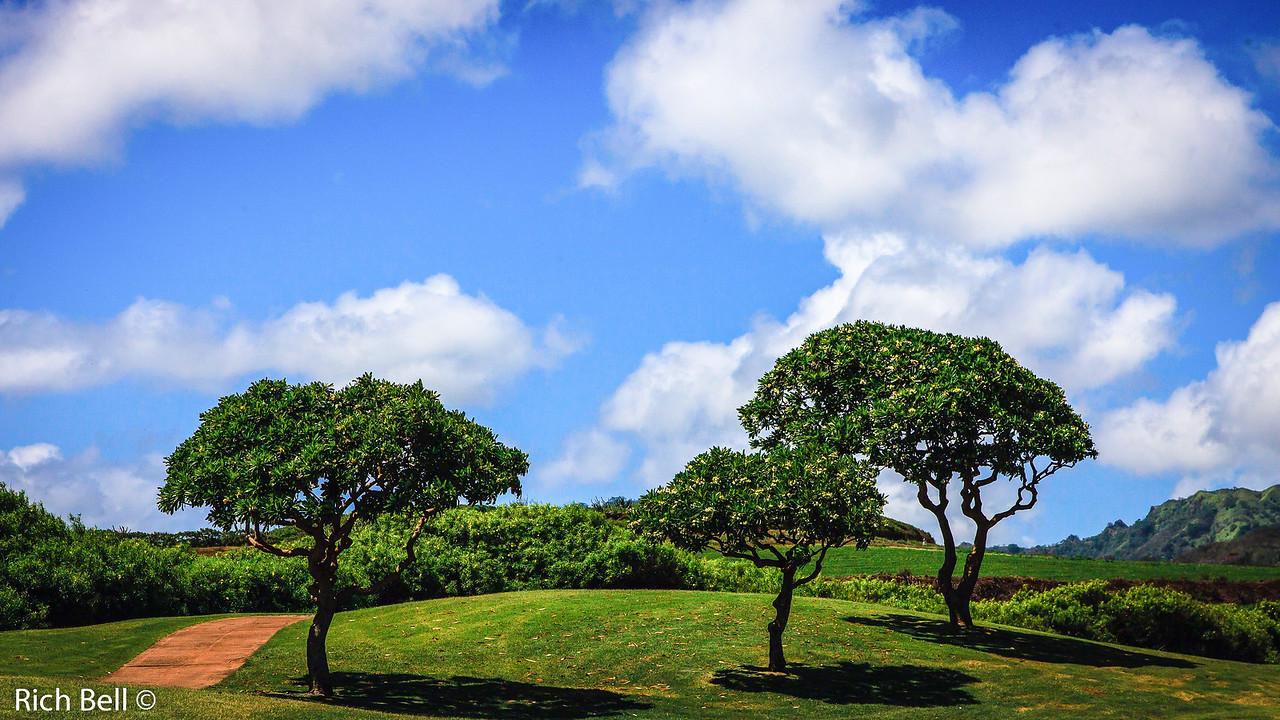 20130501 Kauai Hawaii -0751