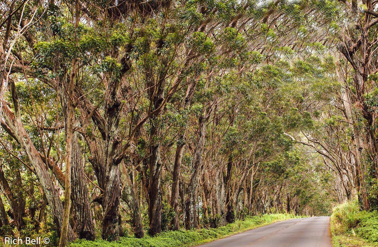 20130430-Kauai Hawaii0700