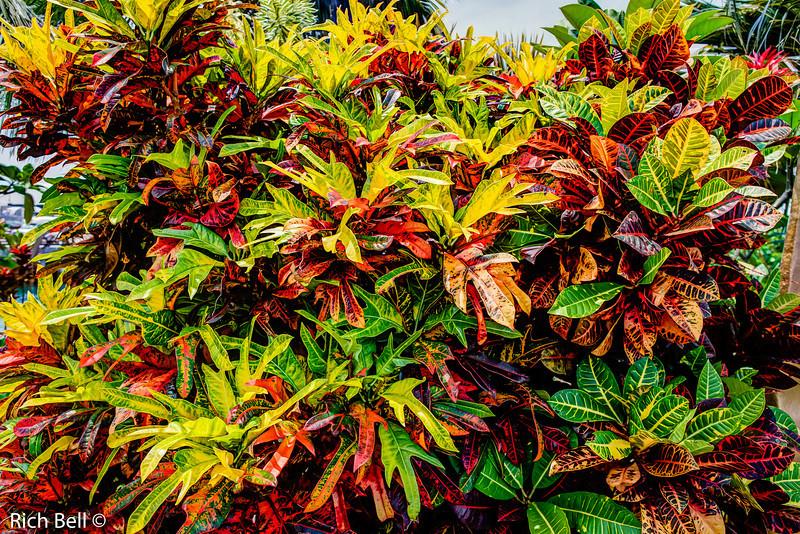 20130416 Hawaii 0224_5_6Natural