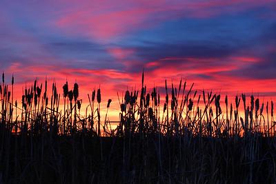 Cattail Sunrise silouette
