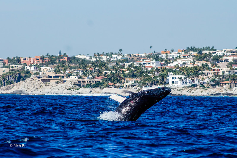 20140221 Cabo 00134