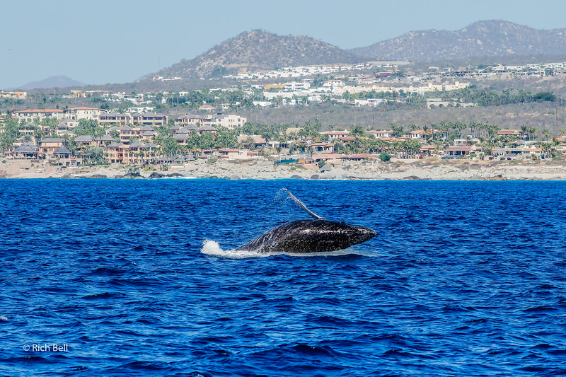 20140221 Cabo -0029