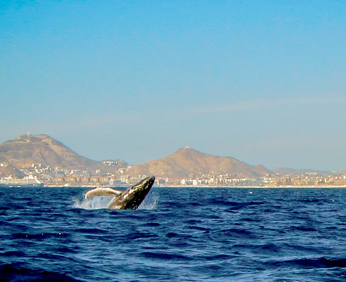20140220 Cabo -0147