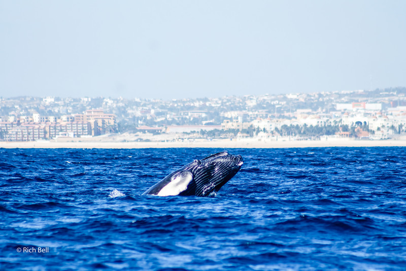 20140221 Cabo 00135