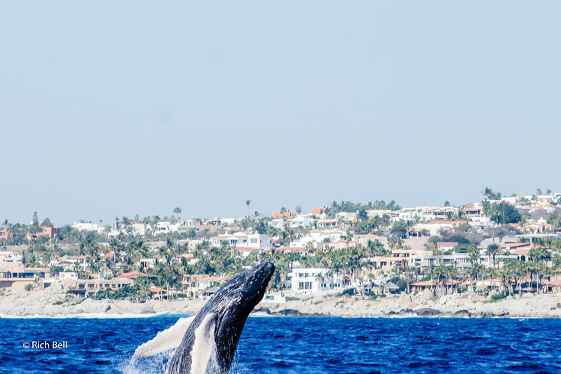 20140221 Cabo 00132