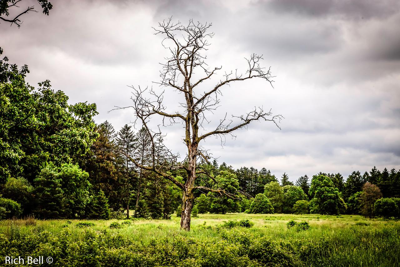20130601  Morton Arboretum -0074
