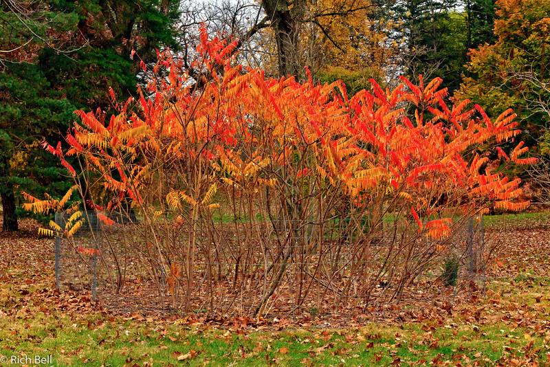 20111106 Morton Arboretum  0202