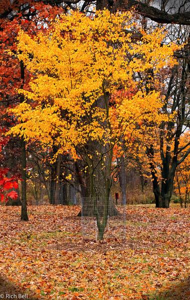 20111106 Morton Arboretum  0200