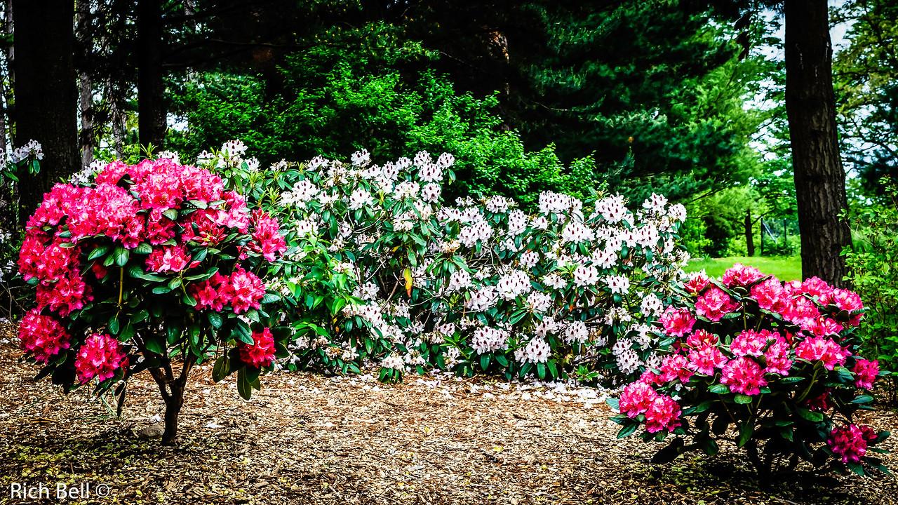20130601  Morton Arboretum -0082