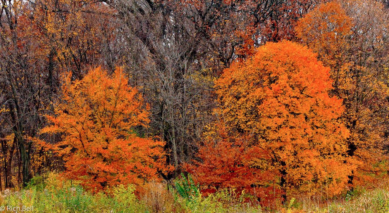 20111106 Morton Arboretum  0154