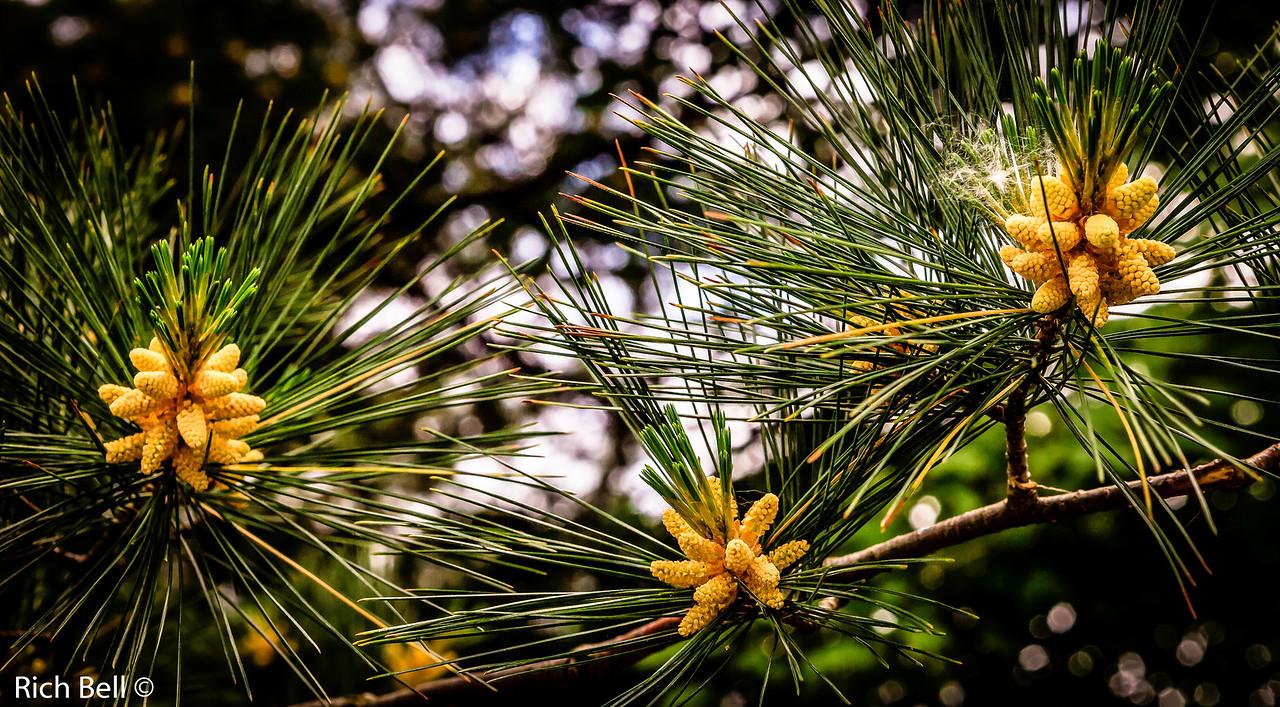 20130601  Morton Arboretum -0260