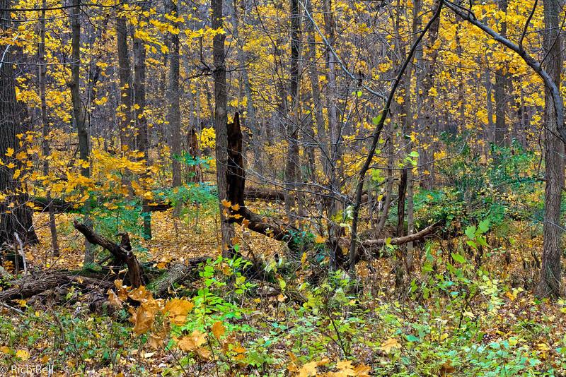 20111106 Morton Arboretum  0148