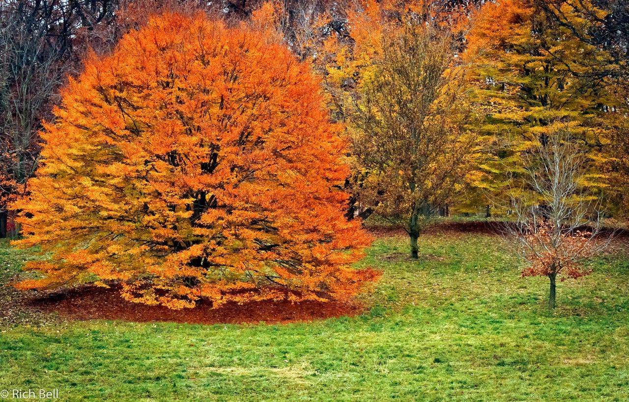 20111106 Morton Arboretum  0162