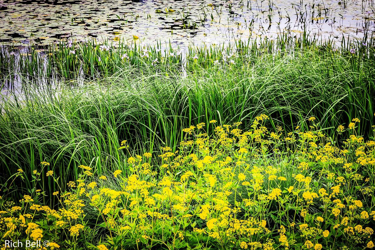 20130601  Morton Arboretum -0289