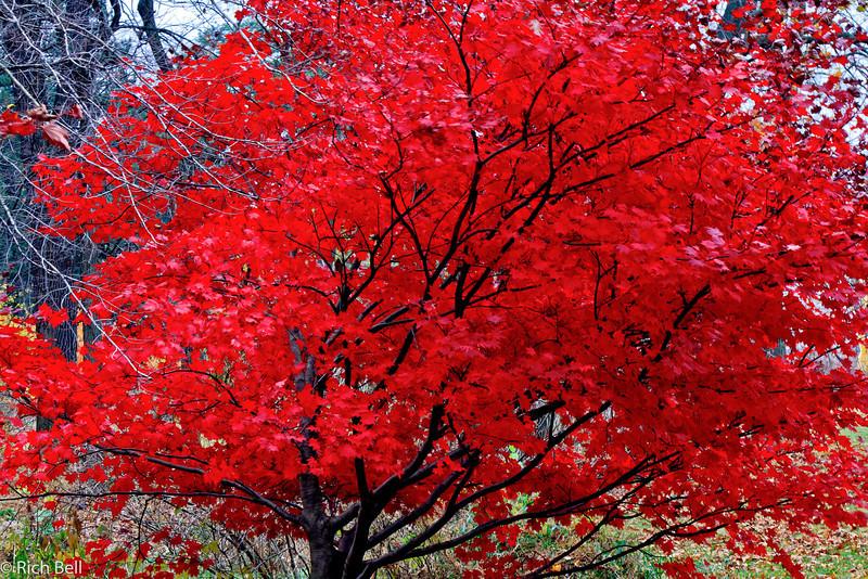 20111106 Morton Arboretum  0178