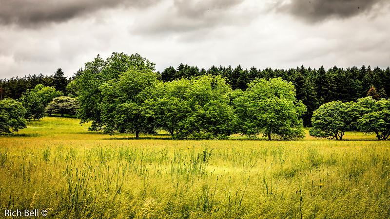20130601  Morton Arboretum -0080