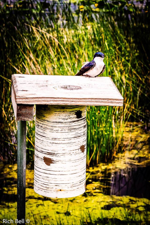 20130601  Morton Arboretum -0280