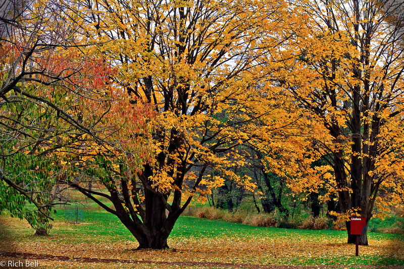 20111106 Morton Arboretum  0207
