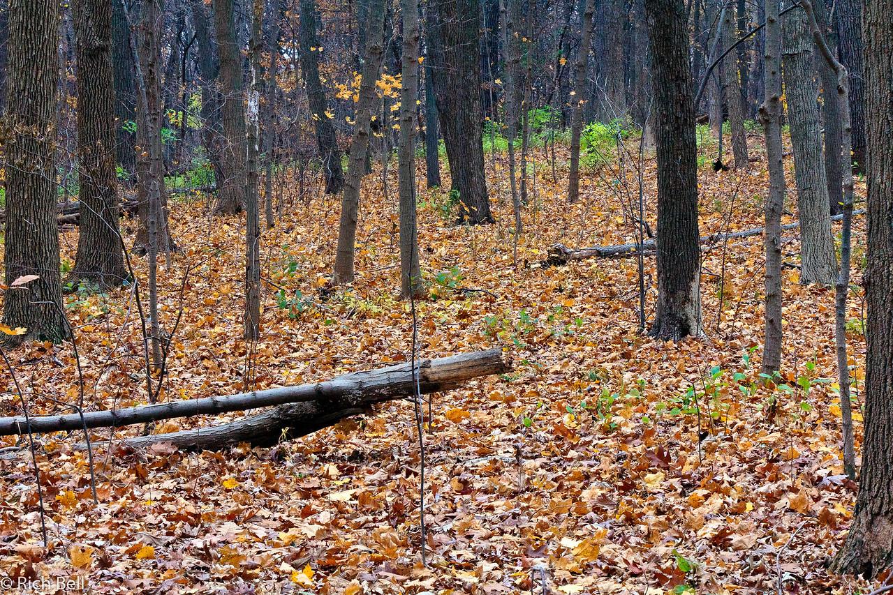 20111106 Morton Arboretum  0151