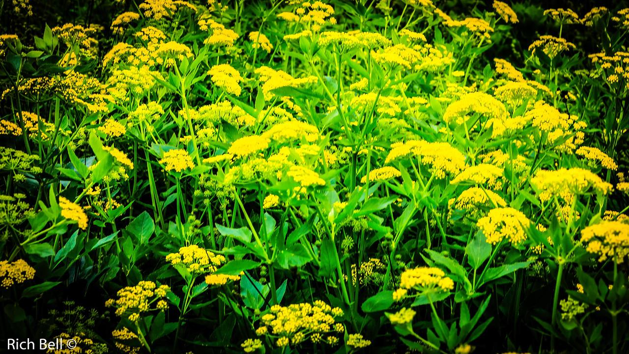 20130601  Morton Arboretum -0286