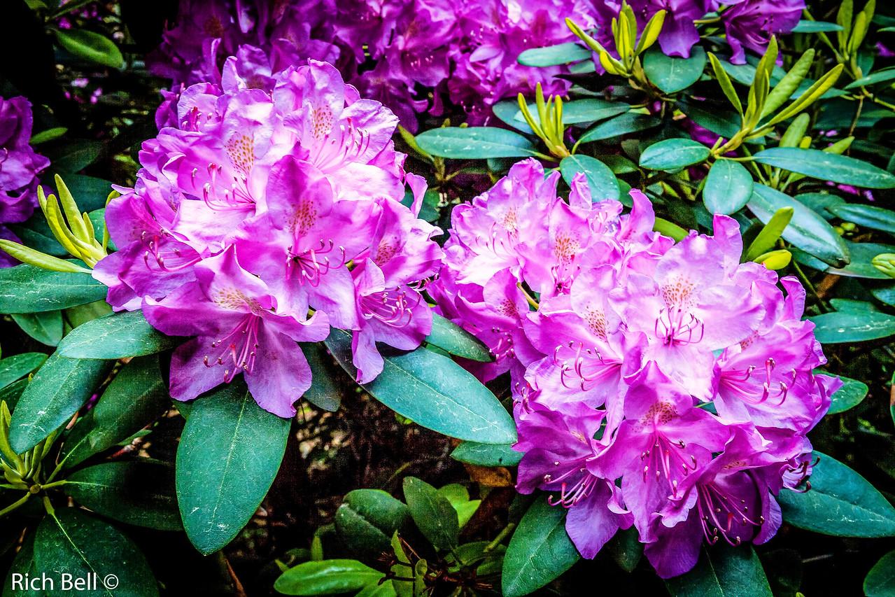 20130601  Morton Arboretum -0124