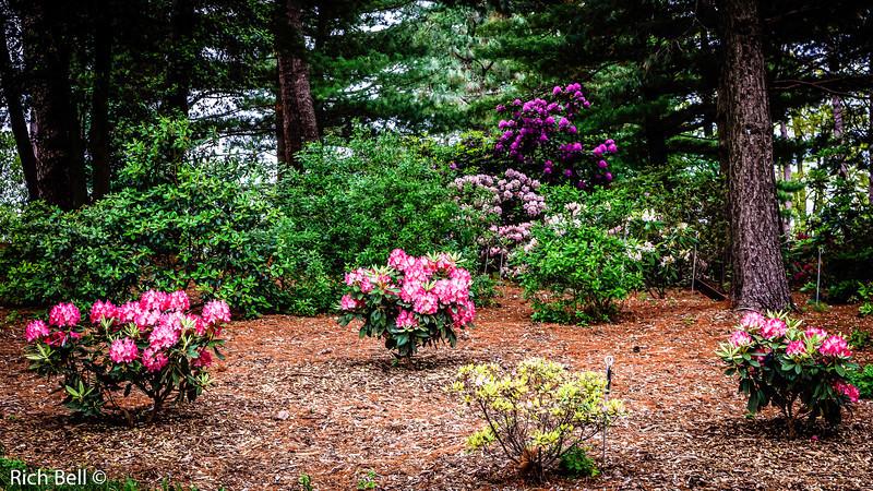 20130601  Morton Arboretum -0085