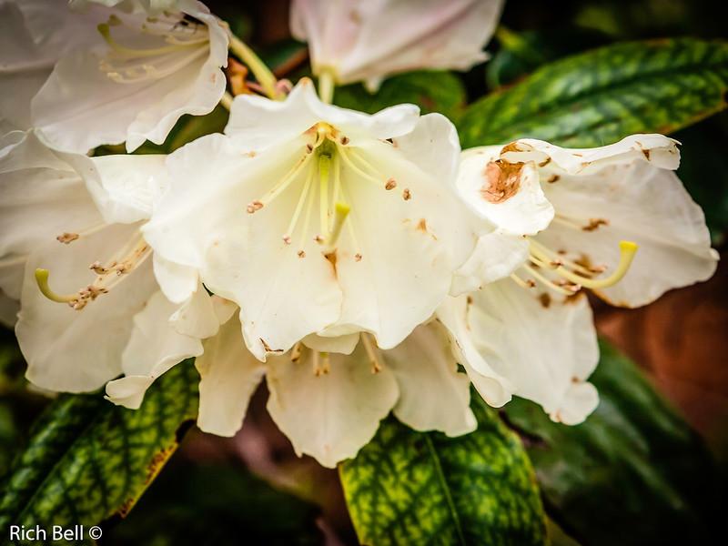 20130601  Morton Arboretum -0118