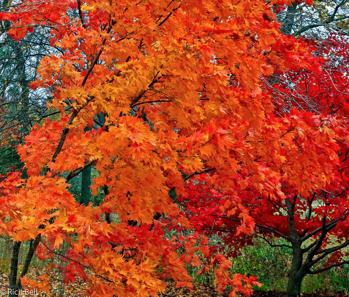 20111106 Morton Arboretum  0183