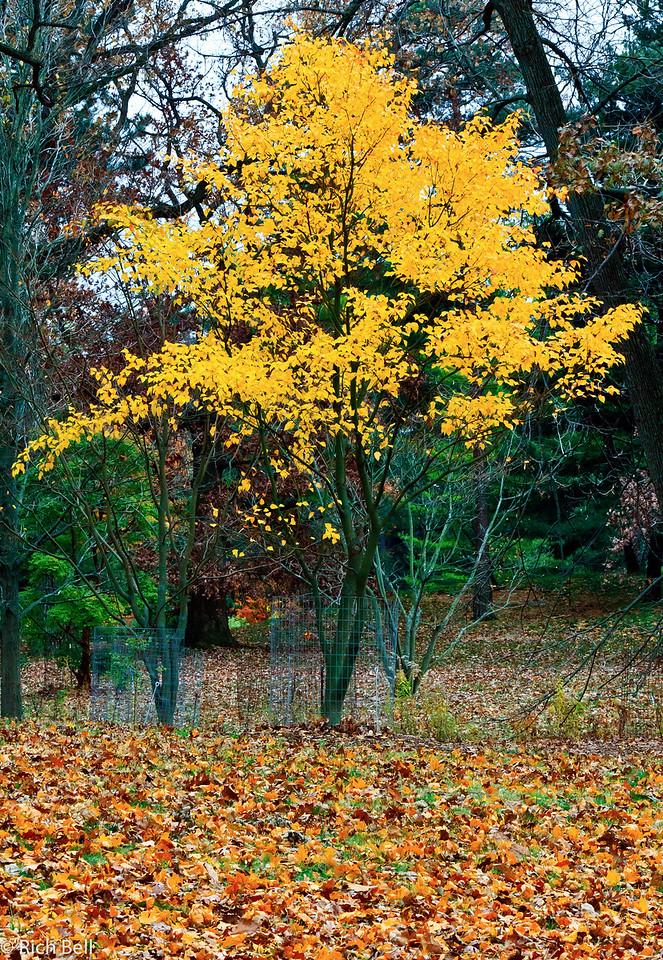 20111106 Morton Arboretum  0186