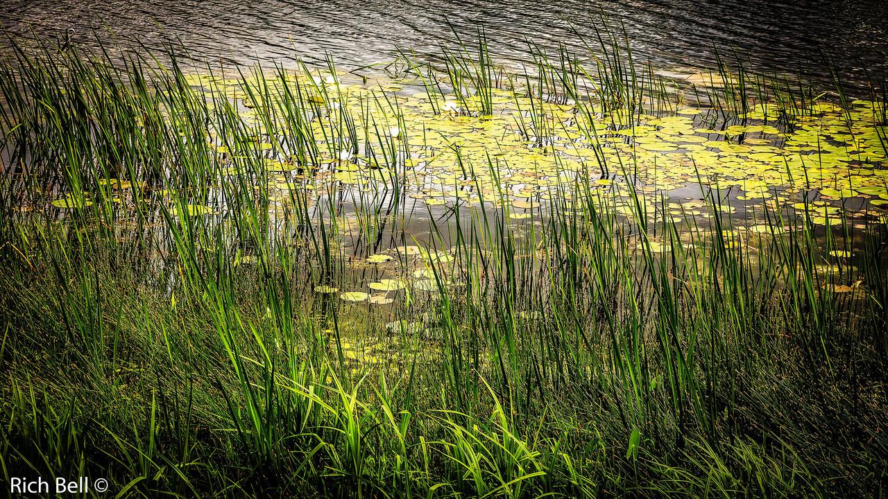 20130601  Morton Arboretum -0277