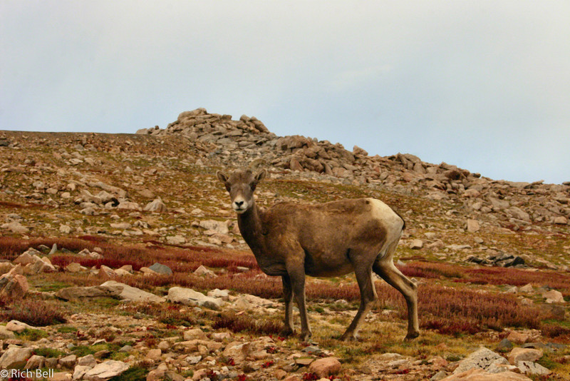 20050831 Mt  Evans Colorado 0094 A
