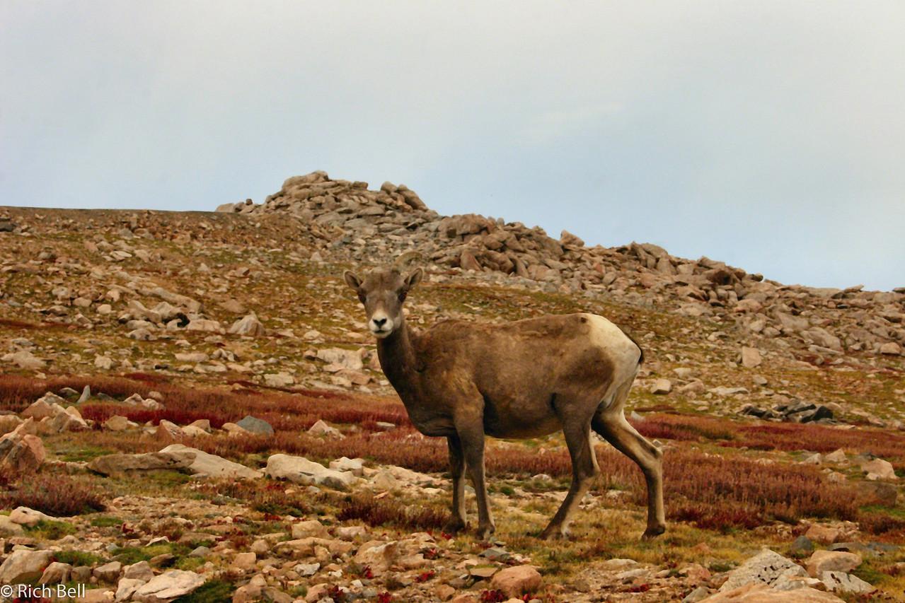 20050831 Mt  Evans Colorado 0094 A