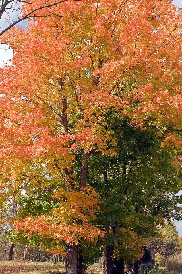 20081025 Park County Indiana0010