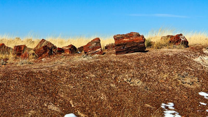 20110114_Arizona_0016