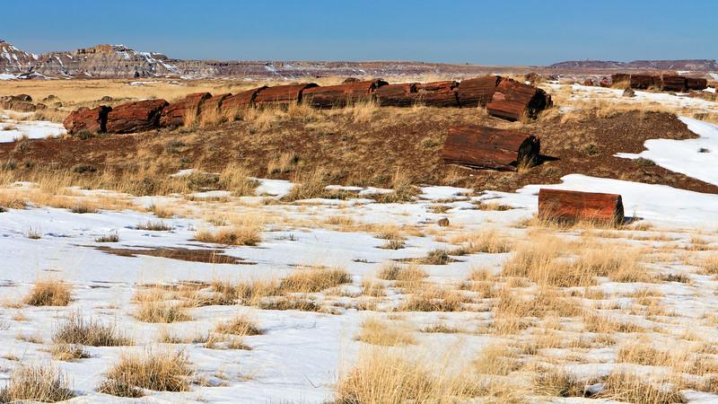 20110114_Arizona_0019