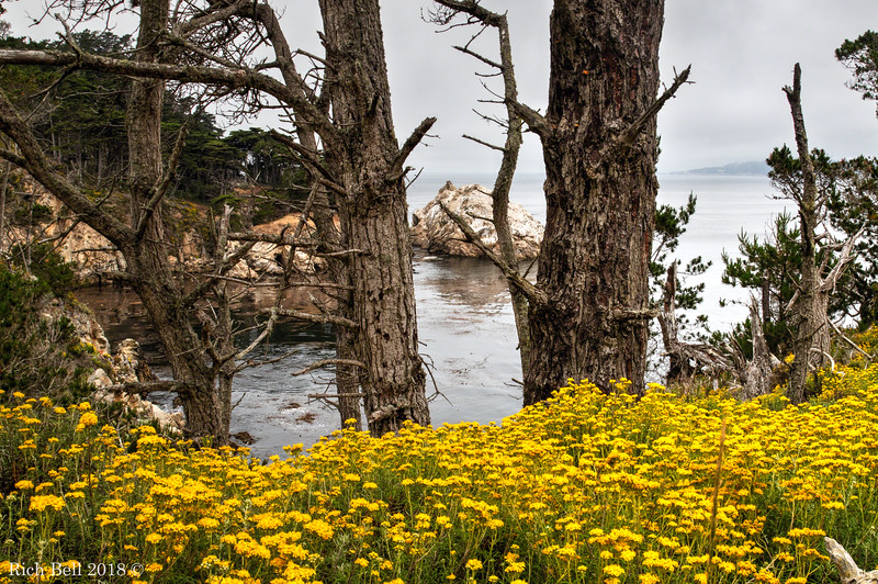 06242018 Point Lobos 0232-Edit_3-Edit_4-Edit_Balanced copy 3