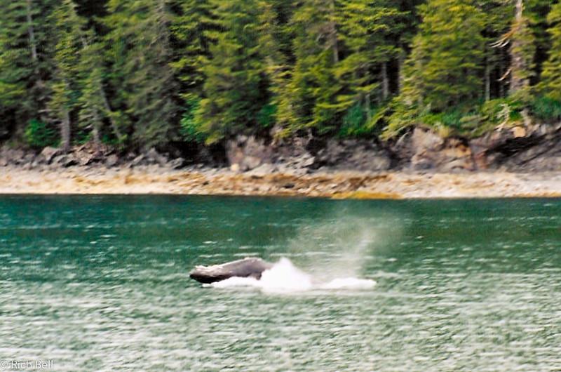 20100721Whale in Alaska 30146