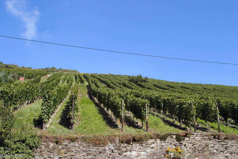 20040916Vineyards in Bacharch Germany0185