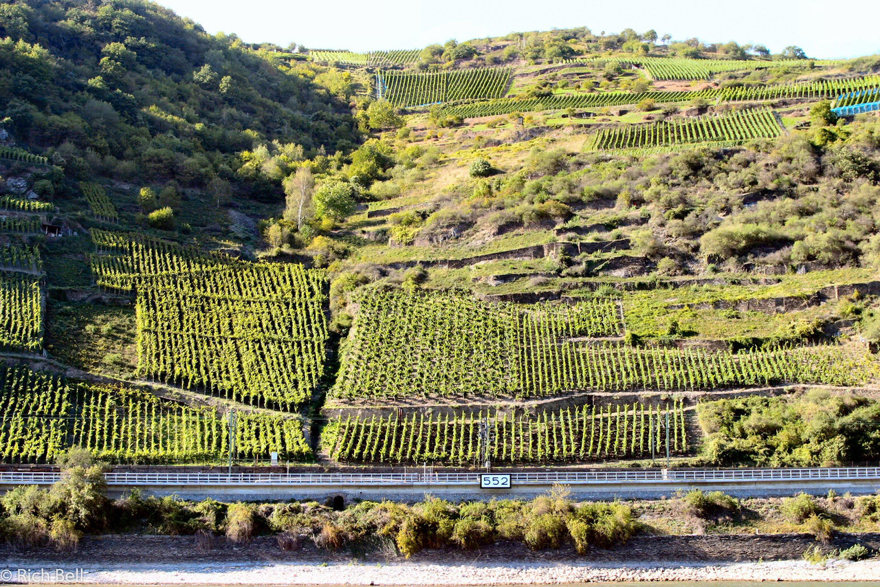 20040915Wine Vineyards on the Rhine River Germany at Seven Maidens0187