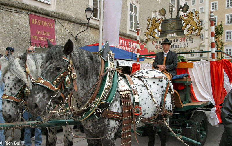 20040922Horse and carriage in parade in Salzburg Austria0245