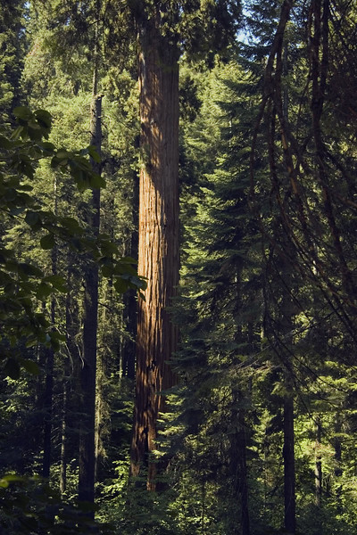 Sequoia & Kings Canyon, California 0003