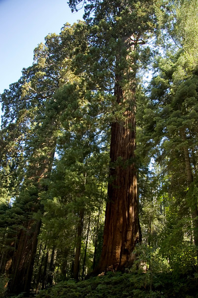 Sequoia & Kings Canyon, California 0004