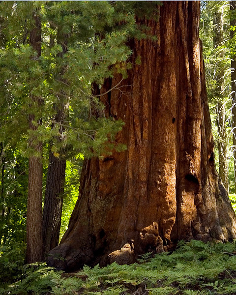 Sequoia & Kings Canyon, California 0005