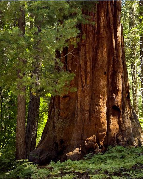 Sequoia & Kings Canyon, California 0005