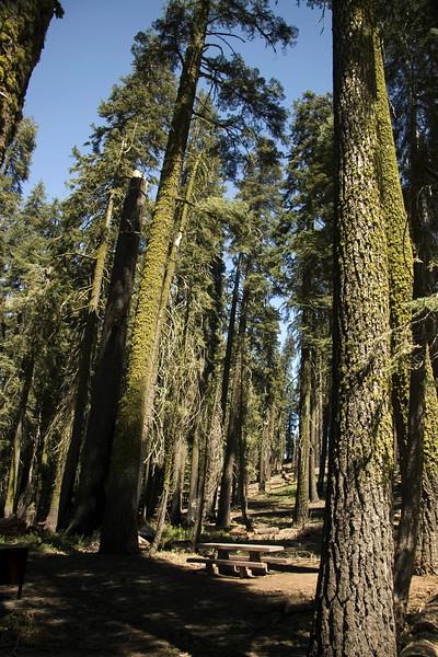 Sequoia & Kings Canyon, California 0013